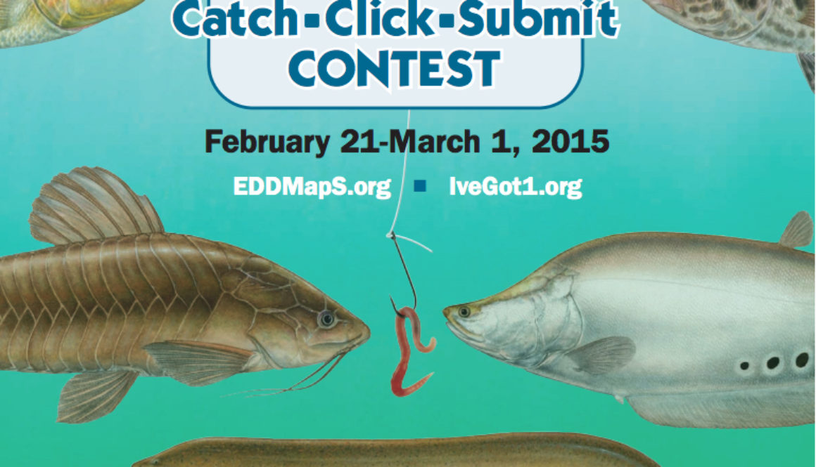 Flyer for Florida Nonnative Fish Catch-Click-Submit Contest 2015. A great example of crowdsourcing real activities.